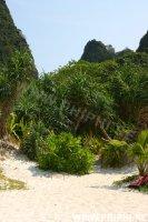 Maya_Bay_Beach_18.JPG -