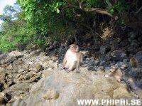 Phi_Phi_Monkeys_05.jpg -